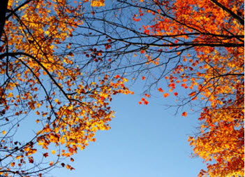 Fall Leaves and Sky by Izabelle Acheson