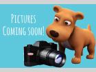 Where's the Pictures?